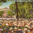Williams Park and Bandstand in St. Petersburg Florida FL Linen Postcard - 0464