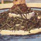 Casper's Gator Jungle in St. Augustine Florida FL Linen Postcard - 0913