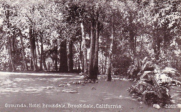 Hotel Brookdale Grounds in California CA Vintage Postcard - 1563