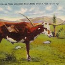 Old Tex, Famous Texas Longhorn Steer Linen Postcard - 1710