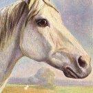 Arab Thoroughbred Horse, Raphael Tuck & Sons Artist Signed Postcard - 1733