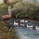 Where the Duck Dabbles, Raphael Tuck & Sons Vintage Postcard - 1734