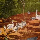 Peligans at Forest Park Zoo in Fort Worth Texas TX, Linen Postcard - 2640