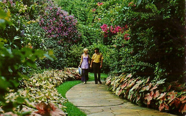 Sunken Gardens in St. Petersburg Florida FL, 1971 Curt Teich Chrome Postcard - 2692