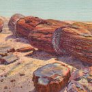 Logs in the Rainbow Forest at Petrified Forest National Park in Arizona AZ 1941 Postcard - 2752