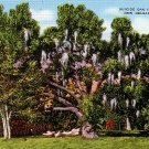 Suicide Oak at City Park in New Orleans Louisiana LA, Linen Postcard - 2787