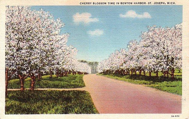 Cherry Blossoms at Benton Harbor in St. Joseph Michigan MI, 1935 Curt Teich Postcard - 2846