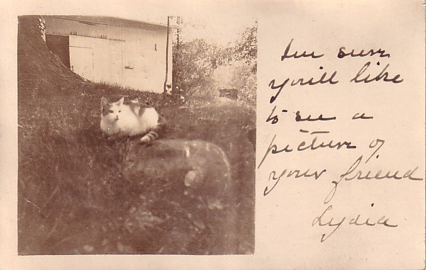 Lydia the Cat, 1912 Real Photo Post Card RPPC - 2938