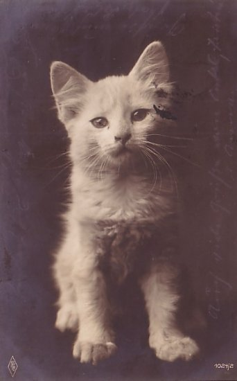 White Kitten, Real Photo Post Card RPPC - 2946