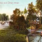 Sheep at Washington Park in Chicago Illinois IL, Vintage Postcard - 2979