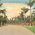Lane of Royal Palms on Miami Beach Florida FL, Linen Postcard - 3107