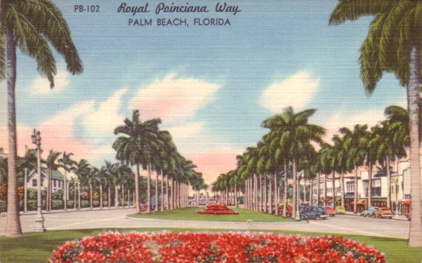 Royal Poinciana Way at Palm Beach Florida FL, Mid Century Linen Postcard - 3108