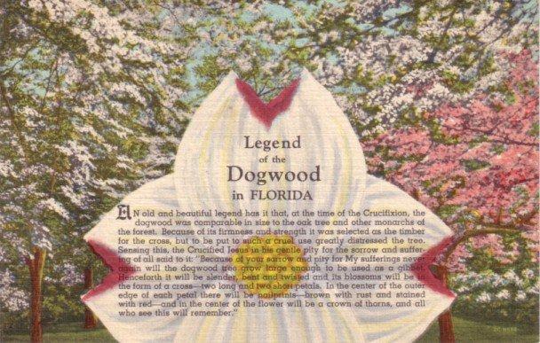 Legend of the Dogwood in Florida FL, 1952 Curt Teich Linen Postcard - 3119