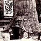 Ripley's World Famous Tree House in Lilley Redwood Park California CA, Real Photo Post Card - 3309