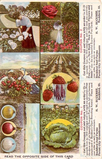 Buckbee's Full of Life Seeds at Rockford Illinois IL,  Advertising Postcard - 3317