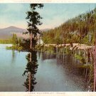 Lake Chatcolet at Idaho ID, Vintage Postcard - 3393