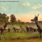 Elk at Riverside Park at Indianapolis Indiana IN, 1912 Vintage Postcard - 3395