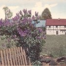 Lilac Bush in the Country Landscape, Hand Colored Vintage Postcard - 3744