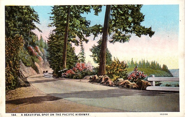 A Beautiful Spot on the Pacific Highway Curt Teich Vintage Postcard - 3780
