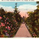 A Walk Amongst Flowers at Los Angeles California CA, 1923 Vintage Postcard - 3784