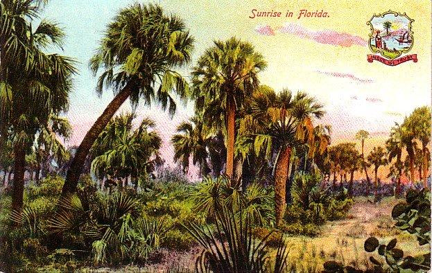Sunrise in Florida FL, Vintage Postcard - 4011