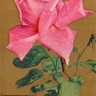 Rose with Verse Vintage Postcard - 4017