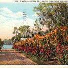 Hedge of Flame Vine and Hibiscus Flowers in Florida FL, 1933 Curt Teich Vintage Postcard - 4032