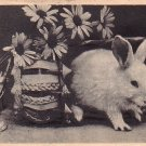 Easter Bunny Leaving Basket, Vintage Postcard - 4034
