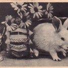 Easter Bunny Leaving Basket, Vintage Postcard - 4034