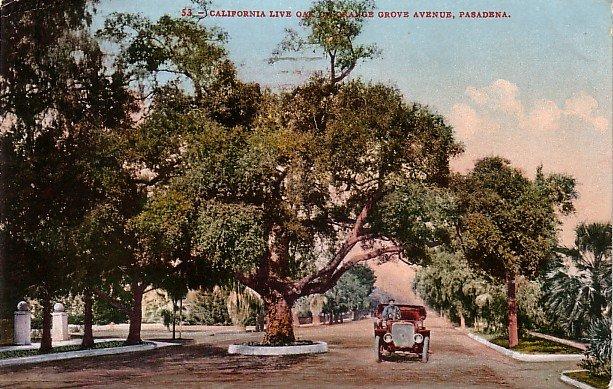 Orange Grove Avenue, Pasadena California CA, Edward H Mitchell 1908 Vintage Postcard - M0001