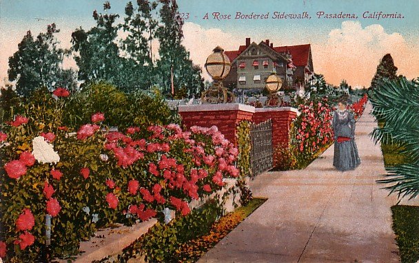 Rose Bordeered Sidewalk in Pasadena California CA,  Edward H Mitchell 1910 Vintage Postcard - M0106