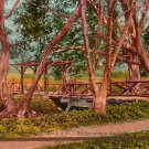 A Rustic Bridge Among the Oaks, Edward H Mitchell 1910 Vintage Postcard - M0117