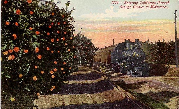 Steam Engine Entering California Orange Groves, Edward H Mitchell 1915 Vintage Postcard - M0206