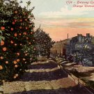 Steam Engine Entering California Orange Groves, Edward H Mitchell 1915 Vintage Postcard - M0206
