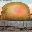 A Mammoth Belleflower Apple, Exaggerated Edward H Mitchell 1911 Vintage Postcard - M0214