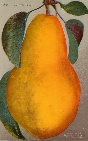 Bartlett Pear, Edward H Mitchell 1911 Vintage Postcard - M0216