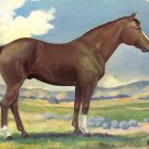 The Western Quarter Horse by Vern Parker, Artist Signed 1953 Chrome Postcard - 4091