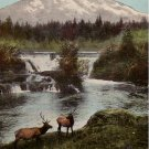 Mount Tacoma in Washington WA, 1911 Vintage Postcard - 4155