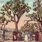 Yucca Palms in the Desert 1911 Vintage Postcard - 4188
