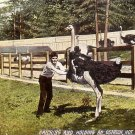 Catching and Holding an Ostrich in Hot Springs Arkansas AR, Vintage Postcard - 020 NJ