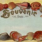 Souvenir From, Seashell Border 1910 Vintage Postcard - 4493