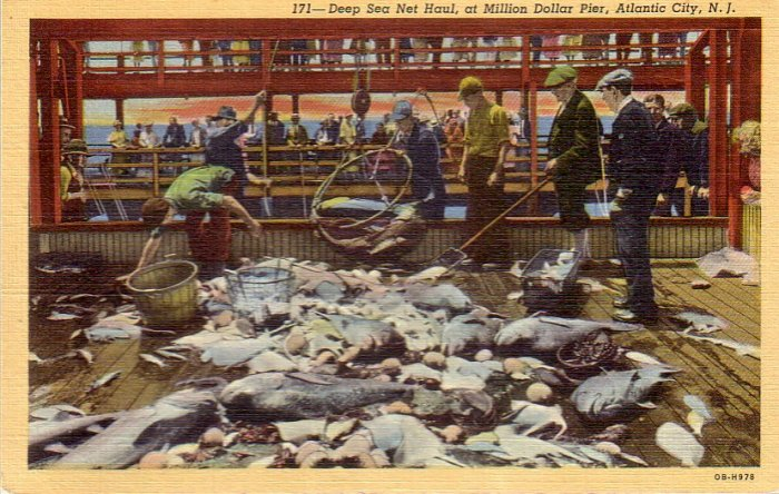 Fish Haul at Million dollar Pier in Atlantic City New Jersey NJ Postcard - 4851