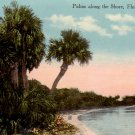 Palms along the Florida FL Shore, 1914 Vintage Postcard - 4853