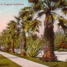 Street Scene in Tropical California CA Vintage Postcard - 4874