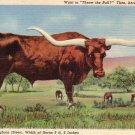 West Texas Longhorn Steer 1936 Curt Teich Linen Postcard - 4876
