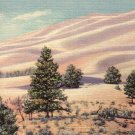 Great Sand Dunes in San Luis Valley Colorado CO 1936 Curt Teich Postcard - 4953