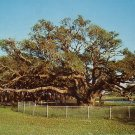 The Big Tree at Goose Island State Park Rockport Texas TX Postcard - 5024