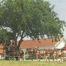 Owens Country Sausage Belgian Horse Hitch Richardson Texas TX Postcard - 5043