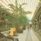 Kapok Tree In Entrance Mall Clearwater Florida FL Chrome Postcard - 5212