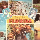 Greetings from Florida FL with Flipper 1969 Chrome Postcard - 5228